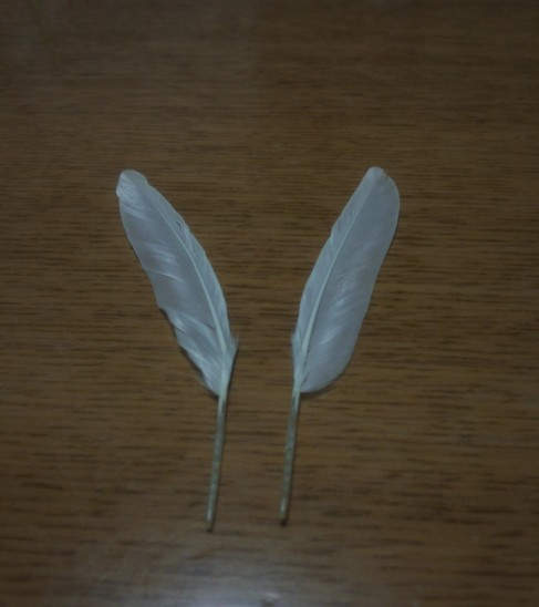 ちょびの羽