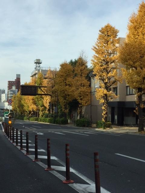 目黒通りの街路樹